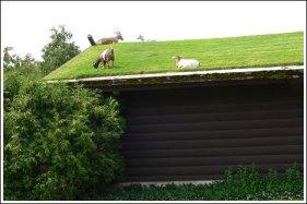 bulledaire chèvres