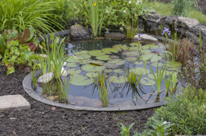 cottage-garden-pond-25191594